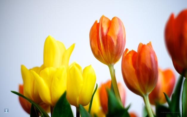 offerte-25-aprile-hotel-misano